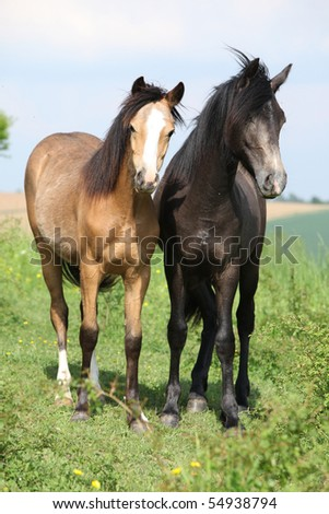 Two foals looking