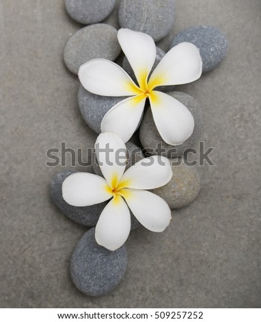 Two frangipani, with pile stones on grey background.