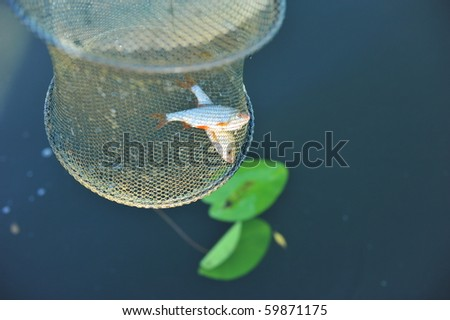 Two fresh caught fishes in fish net - stock photo