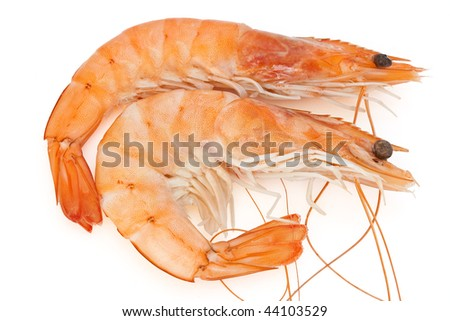 two fresh crayfish isolated on white background