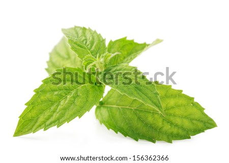 Two fresh green mint leaves isolated over white background - stock photo