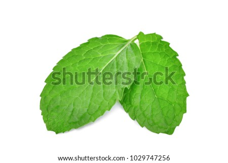 two fresh mint leaves isolated on white background