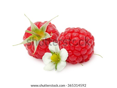Two fresh ripe raspberry berries with flower isolated on white background. Design element for product label, catalog print, web use. - stock photo
