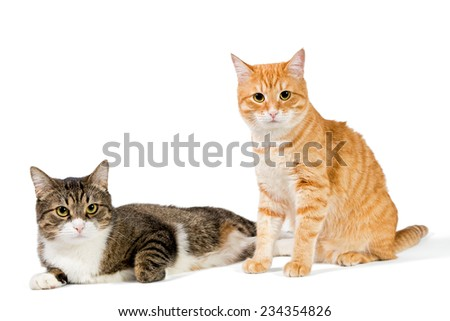 Two friendly cat on a white background, grey and red - stock photo