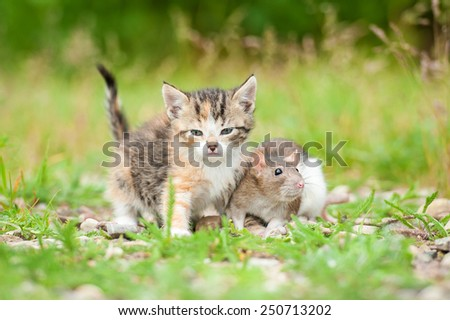 Two friends: little tabby kitten and a rat  - stock photo