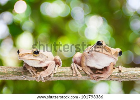 Two, frog on green bokeh background - stock photo