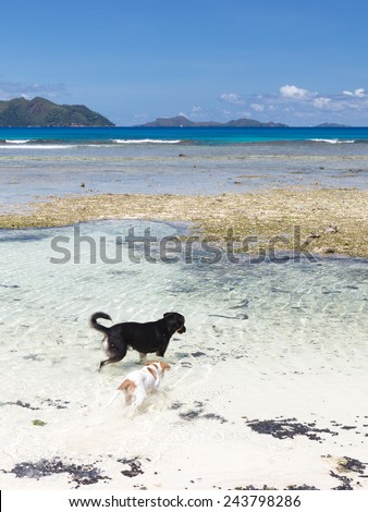 two funny dogs playing in the clean and clear sea - stock photo