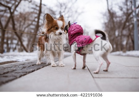 two funny dogs sniffs each other. - stock photo
