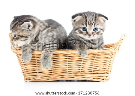 two funny small cats kittens in wicker basket - stock photo
