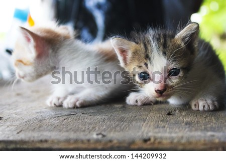 two funny small kittens