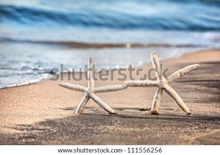 Two funny starfishes on the sandy beach at ocean background - stock photo