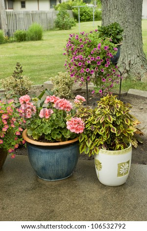 Two garden pots filled with blooming annuals on the patio. - stock photo