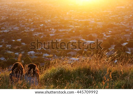 Two girls sitting on Mount Eden, Auckland, New Zealand. They are watching the sunset together and enjoy their friendship. The overexposed sun and underexposed friends set a cozy mood. - stock photo