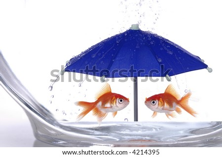 Two goldfish in a bowl take shelter from the rain under a bright blue umbrella. - stock photo