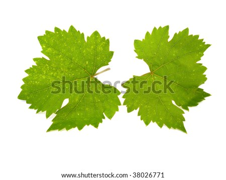 Two grape sheets isolated on a white background - stock photo