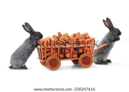 two gray rabbits vnut carrots - stock photo