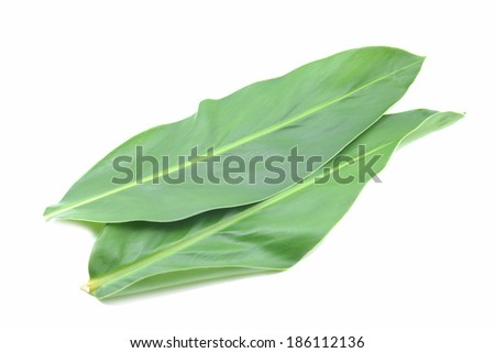 two green leaf, isolated white