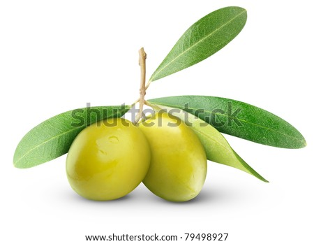 Two green olives on branch with leaves isolated on white - stock photo