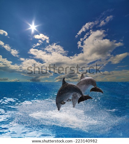 two grey dolphins jumping above blue water - stock photo