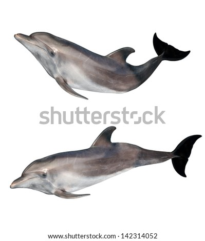 two grey doplhines isolated on white background - stock photo