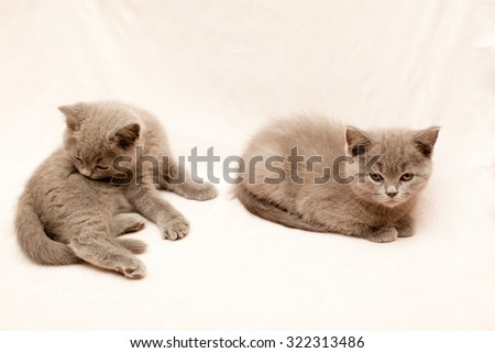 Two grey kittens on pink background