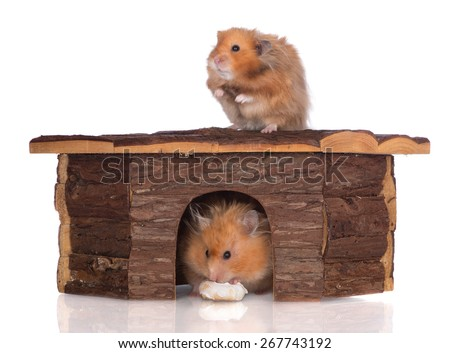 two hamsters in a wooden house - stock photo