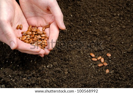 two hand holding seeds and seeds in the soil - stock photo