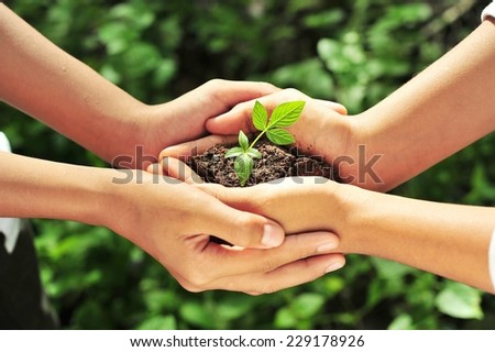 Two hands holding together young  of a tree. - stock photo
