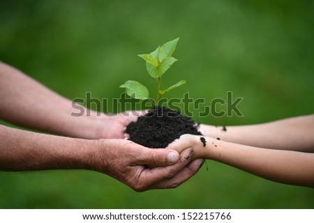 Two hands holding together young sprout of a tree - stock photo