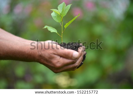 Two hands holding together young sprout of a tree