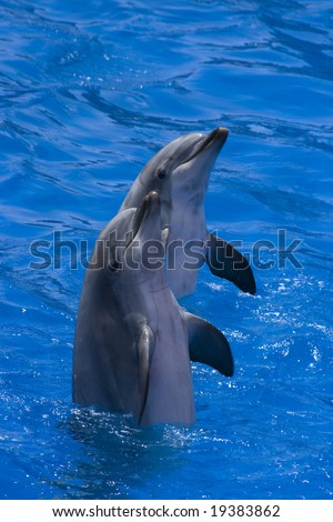 Two happy dolphins - stock photo
