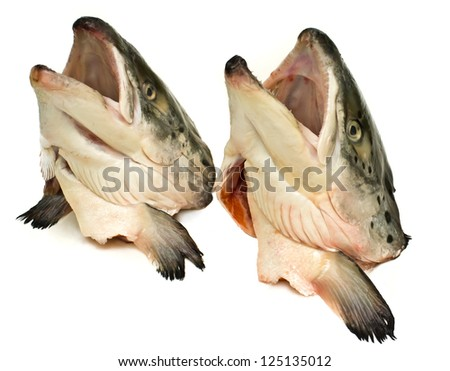 Two heads of salmon.