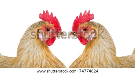 two hens, formed a figure in form heart