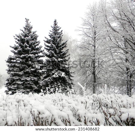 Two hoarfrost spruce trees and bushes, Kolomenskoe, Moscow, Russia. - stock photo