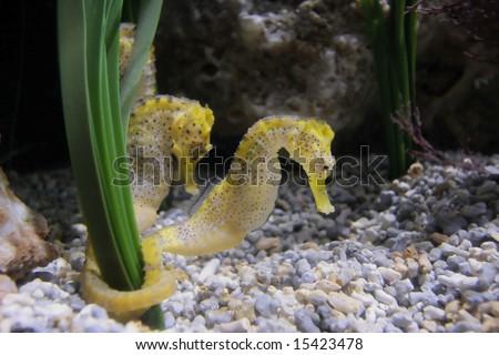 two horse sea - stock photo