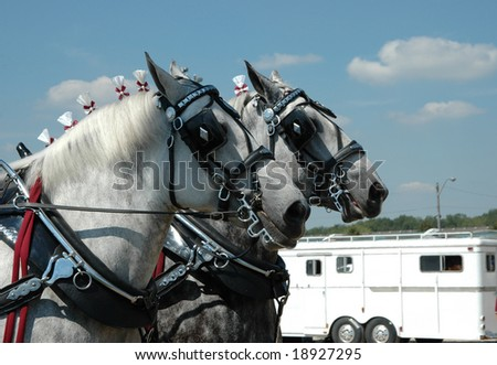 two horses at head of team pulling a stagecoach