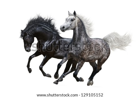 Two horses gallop - isolated on white - stock photo