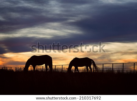 Two horses graze at sundown on a ranch in Colorado. - stock photo