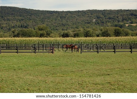 Two horses grazing in meadow with coral fence - stock photo