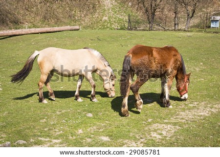 two horses grazing on meadow - stock photo