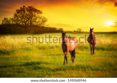 Two horses in meadow at sunset - stock photo