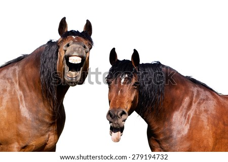 Two horses laughing at funny joke - stock photo