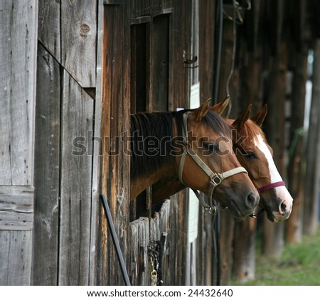 Two Horses Looking out From Their Stalls - stock photo
