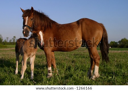 Two horses - mother and child