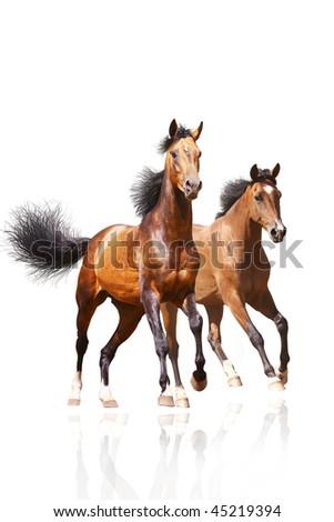 two horses on white - stock photo