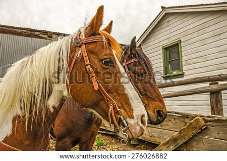 Two horses saddled and waiting for their riders to come and get them - stock photo