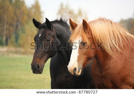 Two horses standing together - stock photo