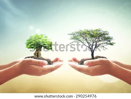 Two human hands holding medium plant or big tree with soil on blur abstract beautiful sea or ocean or forest or desert over colorful sunset background. Ecology concept. World Environment Day concept. - stock photo