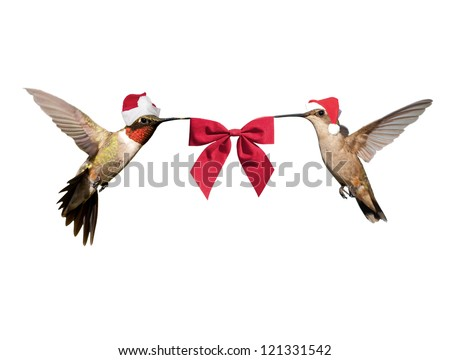 Two Hummingbirds in flight, wearing Santa hats carrying a red bow; isolated on white - stock photo