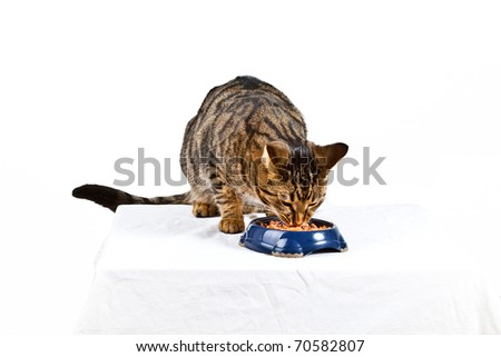 two hungry cats have their meal - stock photo